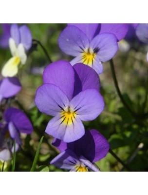 https://www.louis-herboristerie.com/9847-home_default/pensee-sauvage-bio-plante-coupee-100g-tisane-de-viola-tricolor-susp-arvensis-murray.jpg