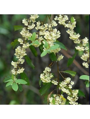 https://www.louis-herboristerie.com/9905-home_default/litsee-citronnee-bio-huile-essentielle-litsea-citrata-10-ml-pranarom.jpg