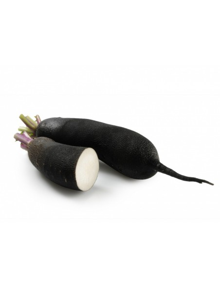Radis noir Bio - Racine coupée 100g - Raphanus raphanistrum subsp. sativus