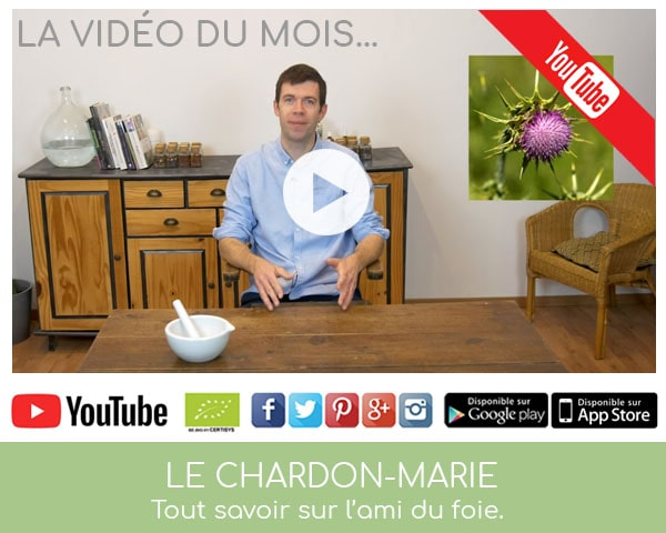 Vidéo sur le Chardon-Marie par Louis Herboristerie