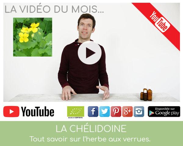 Vidéo sur la chélidoine herbe aux verrues par Louis Herboristerie