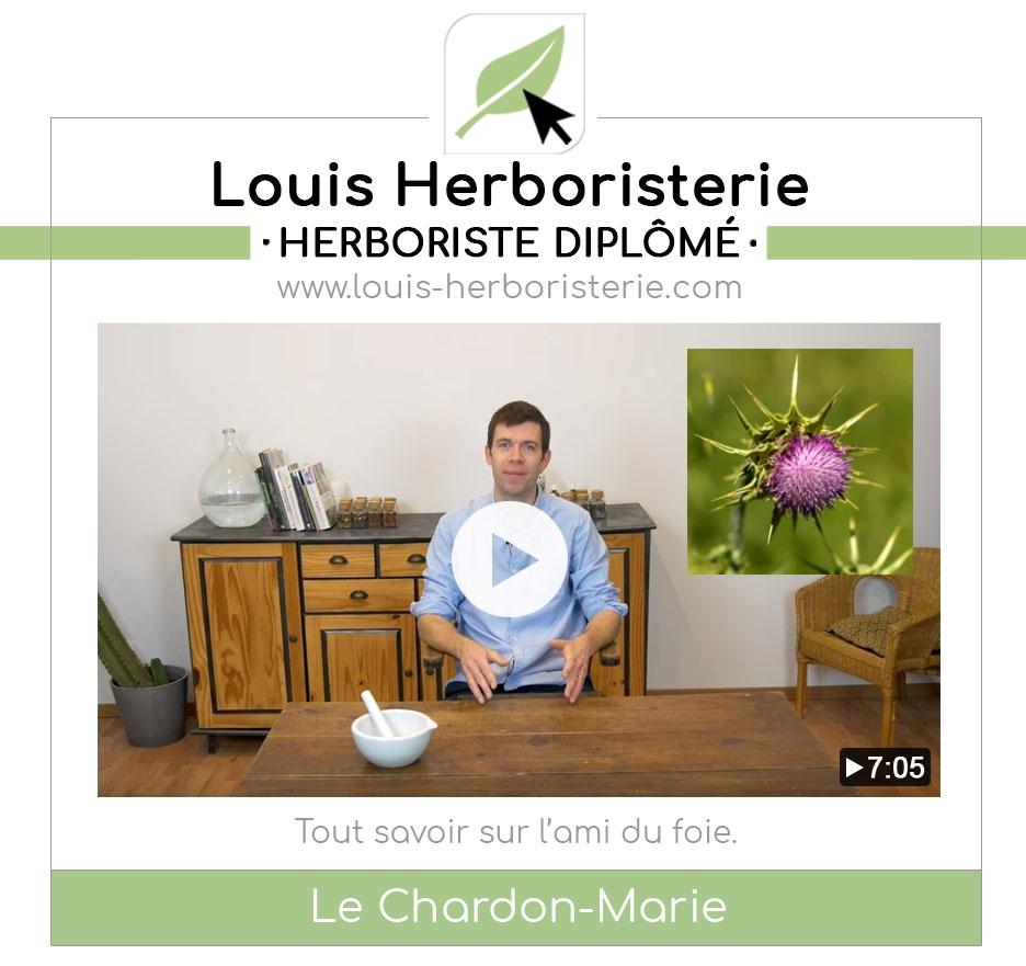 Le chardon-Marie, pour un foie en bonne santé, expliqué en vidéo par Louis l'herboriste
