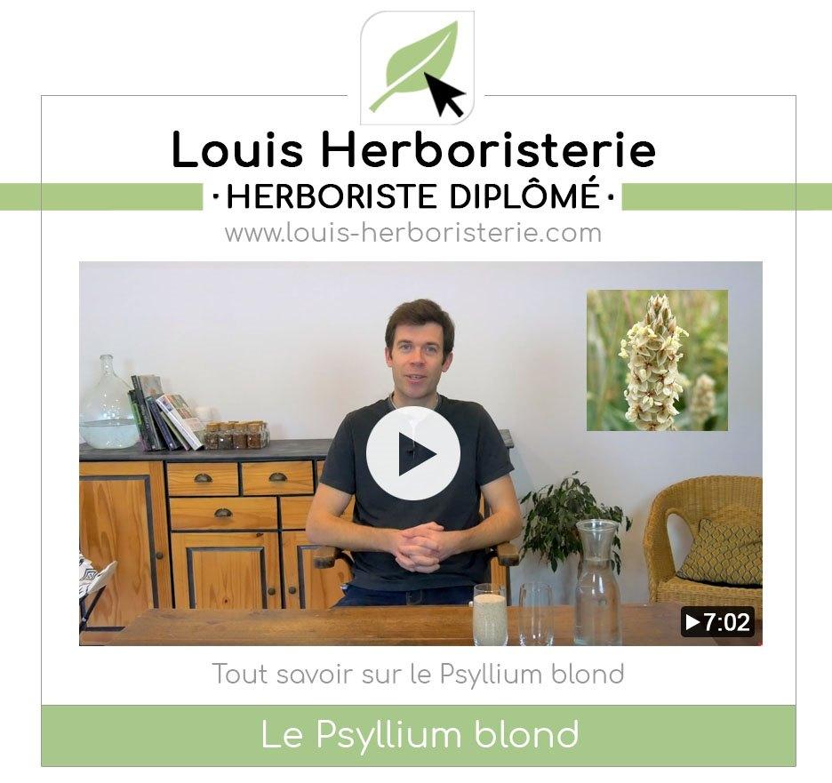 Le psyllium blond, l'ami du côlon, expliqué en vidéo par Louis l'herboriste