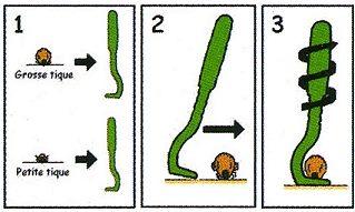 Voici la façon simple et rapide d'utiliser un tire tique disponible à l'herboristerie Louis.
